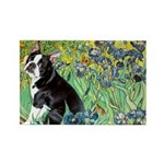 Irises & Boston Ter Rectangle Magnet (10 pack)