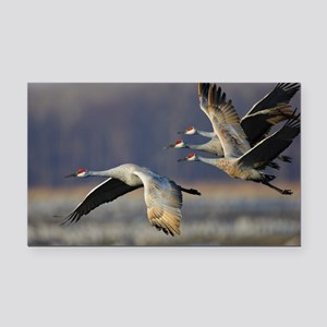 Cranes Rectangle Car Magnet