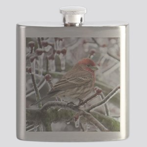 House Finch Flask