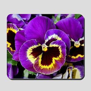 Beautiful purple pansy Mousepad