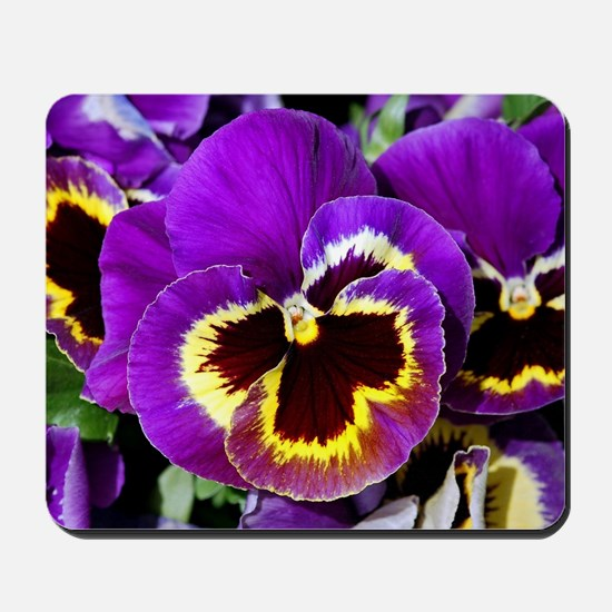 Beautiful purple pansy Mousepad