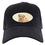 Norfolk Terrier Black Cap with Patch
