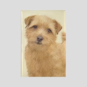 Norfolk Terrier Rectangle Magnet