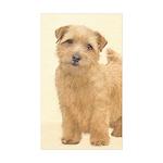 Norfolk Terrier Sticker (Rectangle 50 pk)