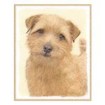 Norfolk Terrier Small Poster
