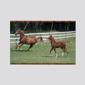 Mare and Foal Rectangle Magnet