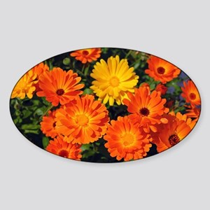 Beautiful orange flowers Sticker (Oval)