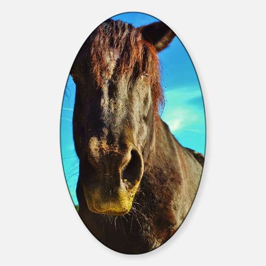 Black Rescued Draft Horse with Blue Sticker (Oval)