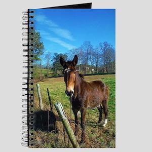 Brown donkey in field Journal
