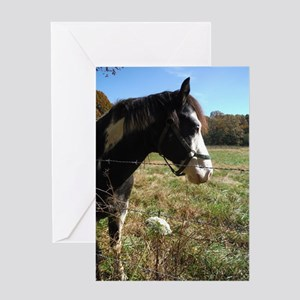 White & Brown horse wildflowers Greeting Card