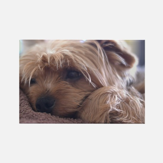 Cute Yorkie Magnets