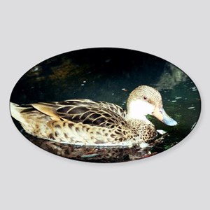 Duck at the Water Sticker (Oval)