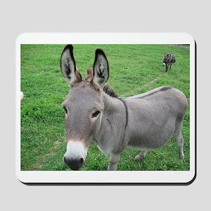 Miniature Donkey Mousepad