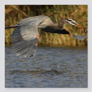 """Heron with Fish Square Car Magnet 3"""" x 3"""""""