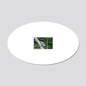 blue jay perched on a tree 20x12 Oval Wall Decal