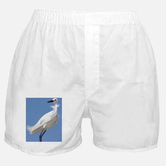 Cute Snowy egret beach Boxer Shorts