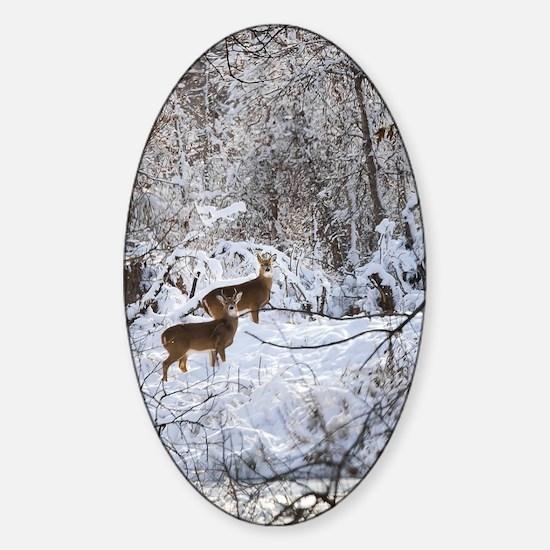 A Winter Wonderland Sticker (Oval)