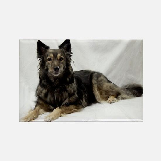 Maia--Keeshond/Cattle Dog/Border  Rectangle Magnet