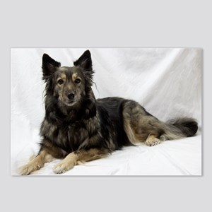 Maia--Keeshond/Cattle Dog Postcards (Package of 8)