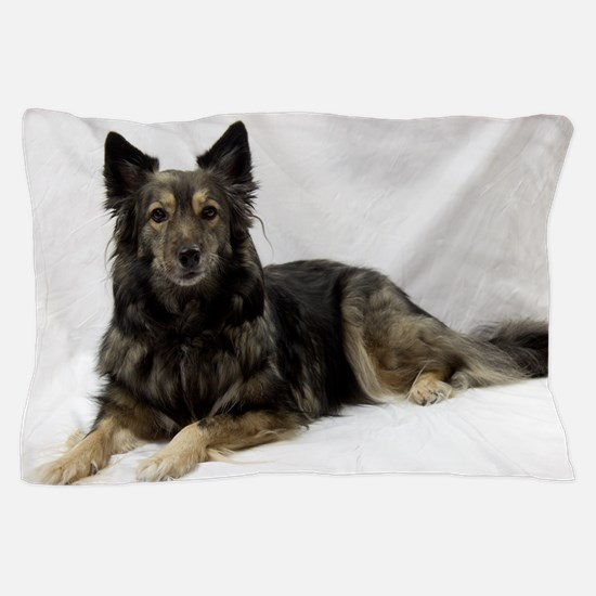 Maia--Keeshond/Cattle Dog/Border Colli Pillow Case
