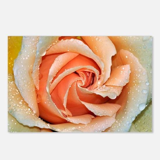Orange rose Postcards (Package of 8)