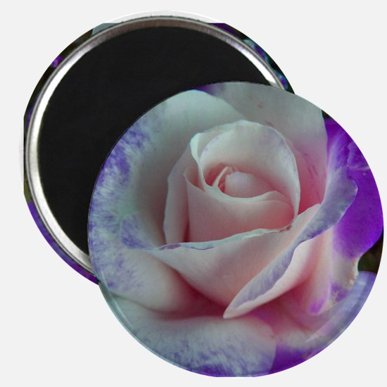 Purple Rose Magnet