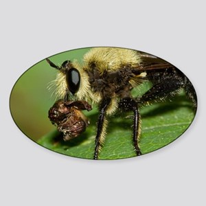 Robber Fly with Lunch Sticker (Oval)