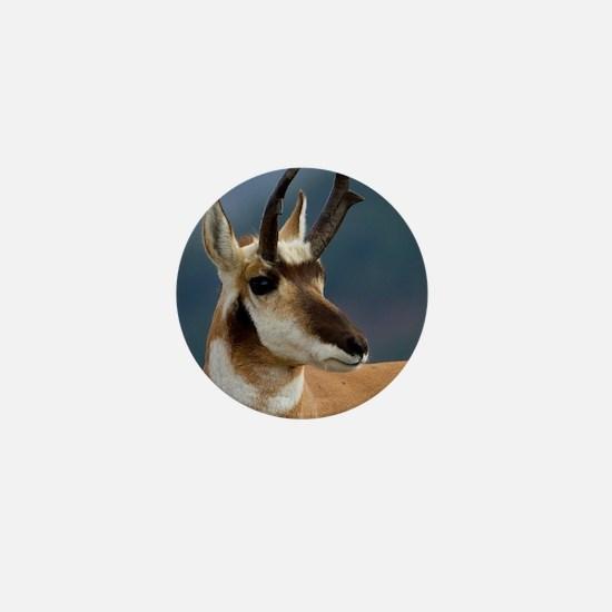 Pronghorn Portrait Mini Button