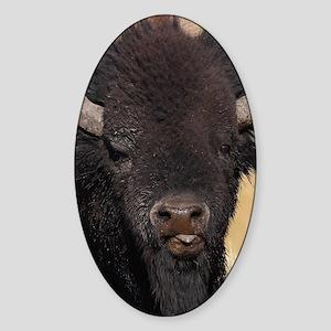 funny bison Sticker (Oval)