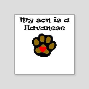 My Son Is A Havanese Sticker
