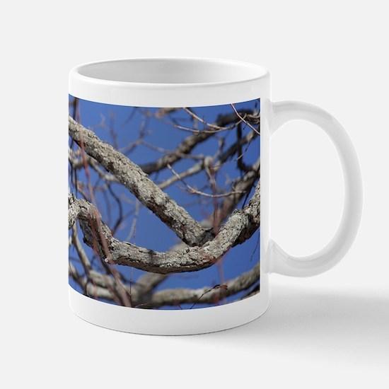 Red Tailed Hawk Mug Mugs
