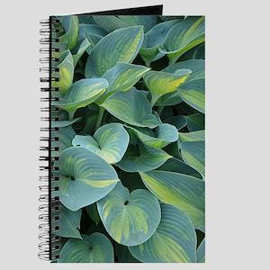 Lush green hosta leaves Journal