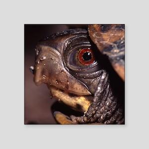 """turtle Square Sticker 3"""" x 3"""""""