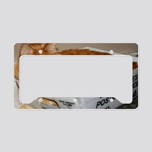 Mail Cat License Plate Holder