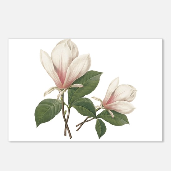 Vintage botanical art, elegant magnolia flower. Po