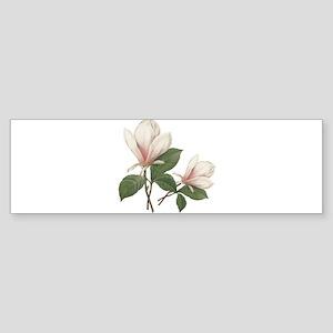 Vintage botanical art, elegant magnolia flower. Bu