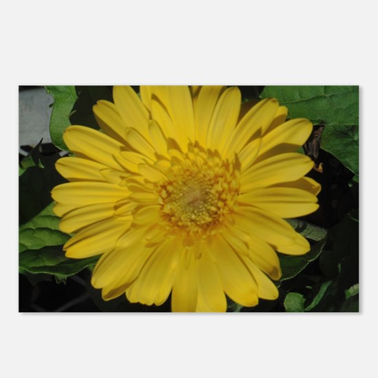Yellow floral Gerber dais Postcards (Package of 8)