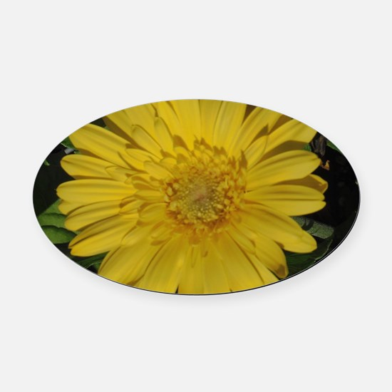 Yellow floral Gerber daisy  Oval Car Magnet