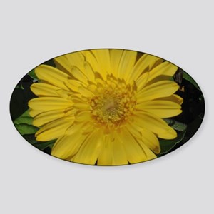Yellow floral Gerber daisy  Sticker (Oval)