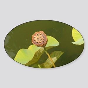 Lotus pod at fountain Sticker (Oval)