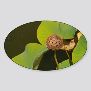 Lotus pod Sticker (Oval)