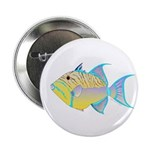Queen Triggerfish 2.25