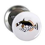 Clown Triggerfish 2.25