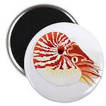 Chambered Nautilus Magnets