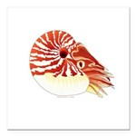 Chambered Nautilus Square Car Magnet 3