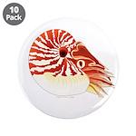 Chambered Nautilus 3.5