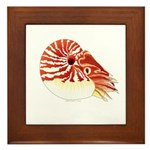 Chambered Nautilus Framed Tile