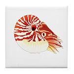 Chambered Nautilus Tile Coaster