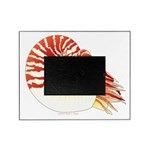 Chambered Nautilus Picture Frame