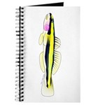 Cleaner Goby Journal